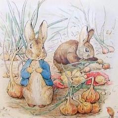 班家小兔和鼠太太小不点